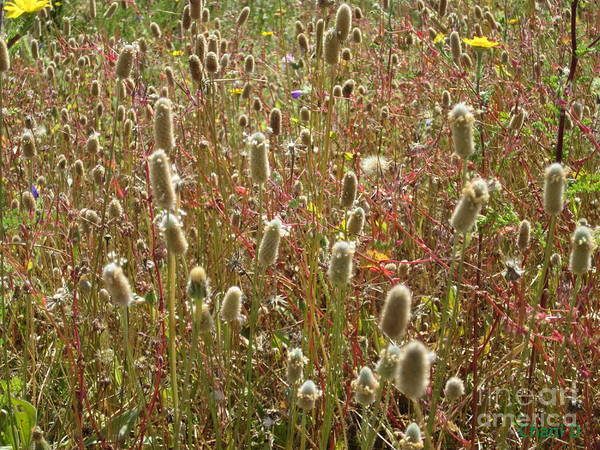 Spring Meadow Art Print