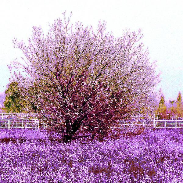 Blooming Tree Mixed Media - Spring Meadow by KaFra Art