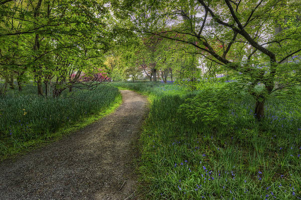 Photograph - Spring Meadow Path by Ian Mitchell