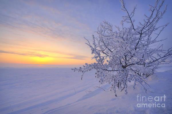 Hoar Photograph - Spring Morning by Dan Jurak