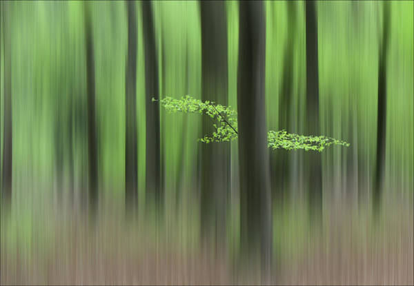 Trunks Photograph - Spring Morning by Huib Limberg