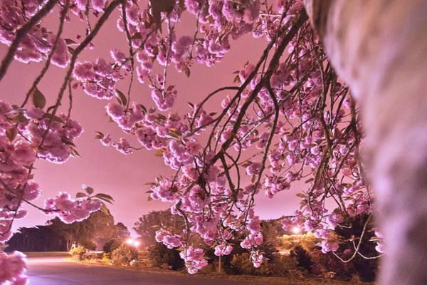 Furon Photograph - Spring Night   by Daniel Furon