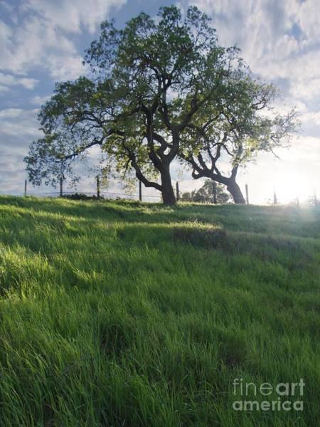 Breeze Photograph - Spring Oaks by Stu Shepherd