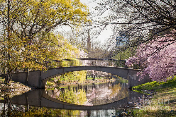 Photograph - Spring On The Charles River Esplanade by Susan Cole Kelly