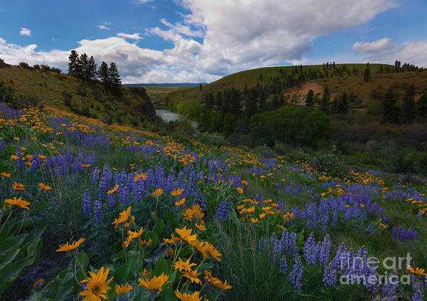 Wall Art - Photograph - Spring On The Yakima by Mike  Dawson