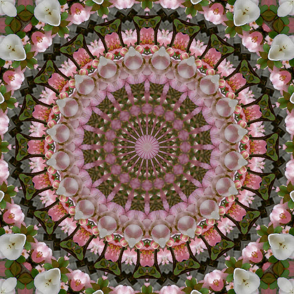 Photograph - Spring Quince Blossoms Kaleidoscope by MM Anderson