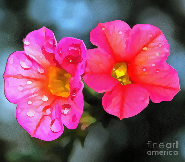 Petunias Photograph - Spring Rain by Krissy Katsimbras