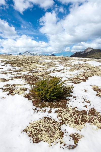 Photograph - Spring Reaches The High Ridges by Tim Newton