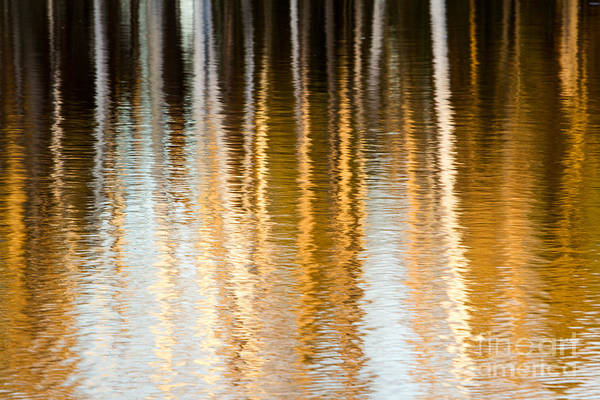 Photograph - Spring Reflections by Lori Dobbs