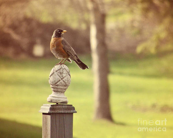 Wall Art - Photograph - Spring Robin by Emily Kelley