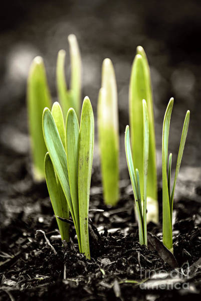 Gardening Wall Art - Photograph - Spring Shoots by Elena Elisseeva
