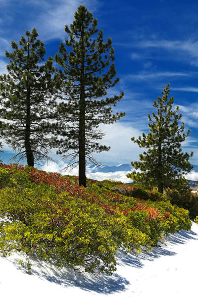 Photograph - Spring Snow In Mountains by Michael Hope