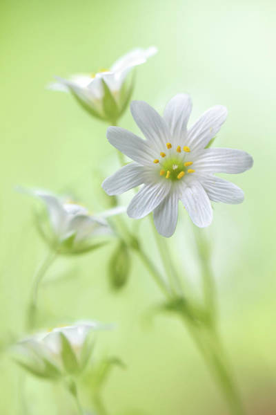 Wall Art - Photograph - Spring Sparkle by Mandy Disher