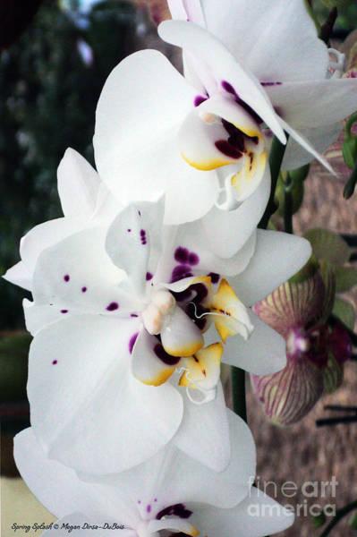 Spring Splash Orchid Art Print