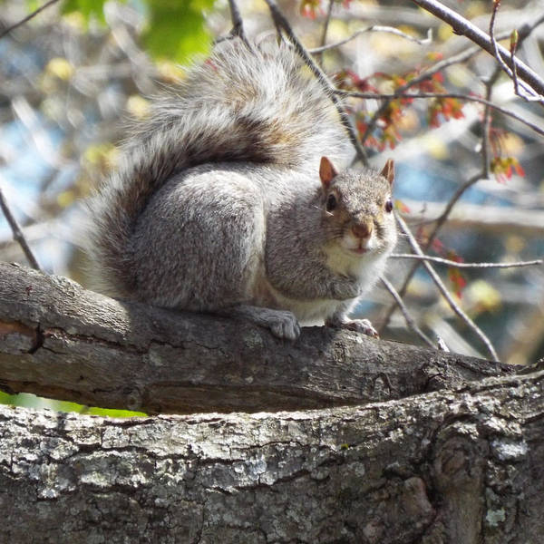 Wall Art - Photograph - Spring Squirrel by Lisa Roy