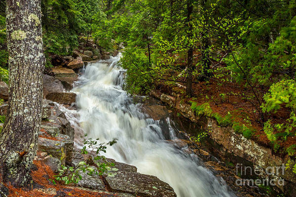 Photograph - Spring Stream In Acadia by Susan Cole Kelly