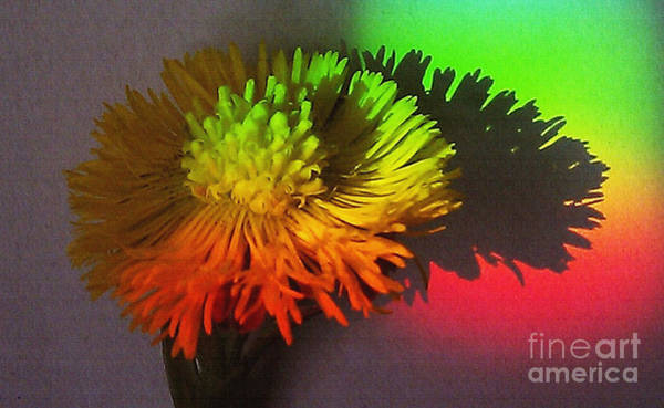 Wall Art - Photograph - Spring Through A Rainbow by Martin Howard