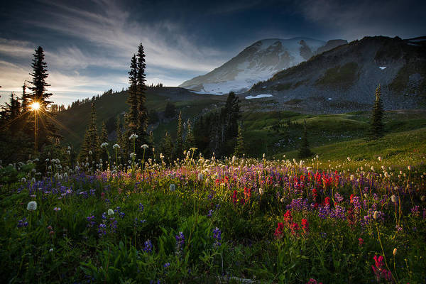 Wall Art - Photograph - Spring Time At Mt. Rainier Washington by Larry Marshall