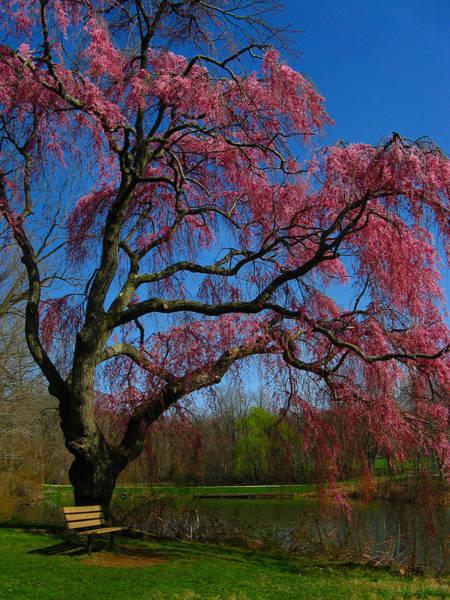 Photograph - Spring Time by Raymond Salani III