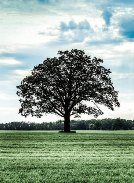 Wall Art - Photograph - Spring Tree by Anna-Lee Cappaert