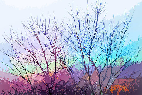 Photograph - Spring Trees Abstract by Duane McCullough