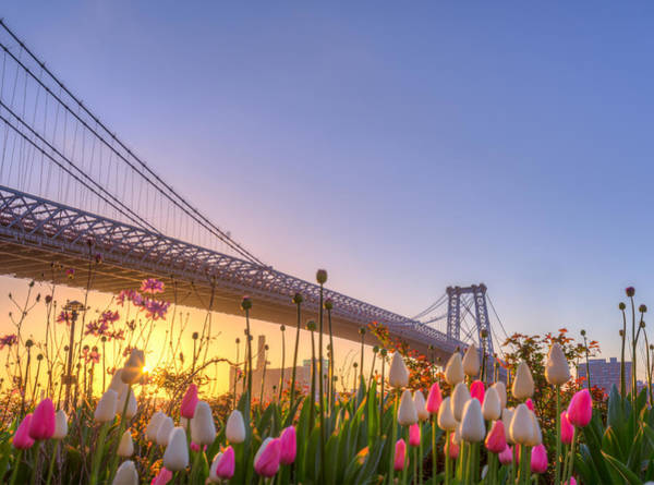 Williamsburg Photograph - Spring by Tristan O'tierney