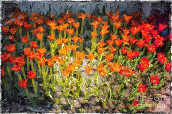 Holland Mi Digital Art - Spring Tulips by Georgianne Giese