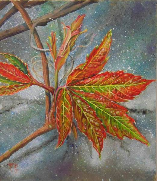 Painting - Spring Virginia Creeper by Nicole Angell