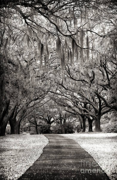 Photograph - Spring Walk by John Rizzuto