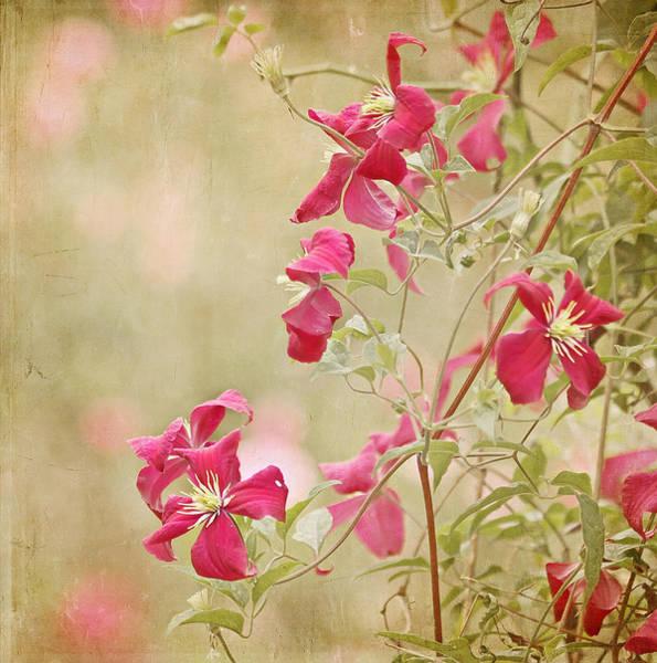Photograph - Spring Whisper by Kim Hojnacki