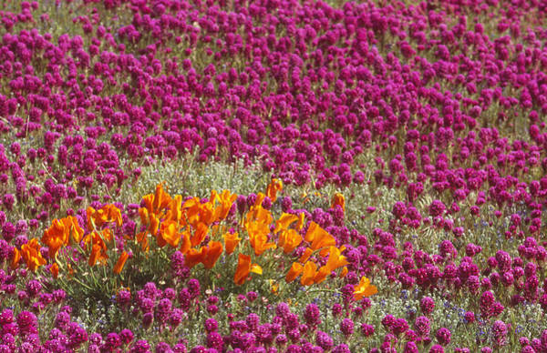 Wall Art - Photograph - Spring Wildflowers by Brenda Tharp