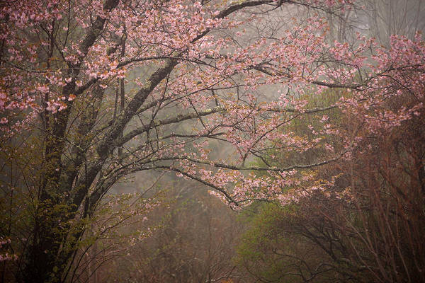 Wall Art - Photograph - Spring Woods by Patrick Downey
