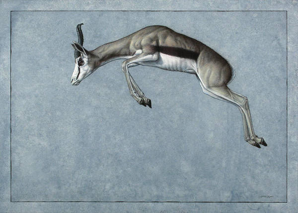 Fine Painting - Springbok by James W Johnson