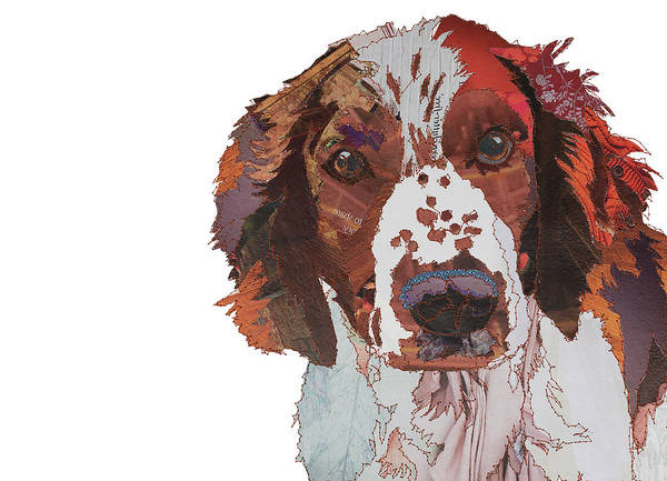 Welsh Springer Spaniel Painting - Springer by MGL Meiklejohn Graphics Licensing