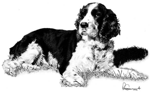 Wall Art - Drawing - Springer by Rob Christensen