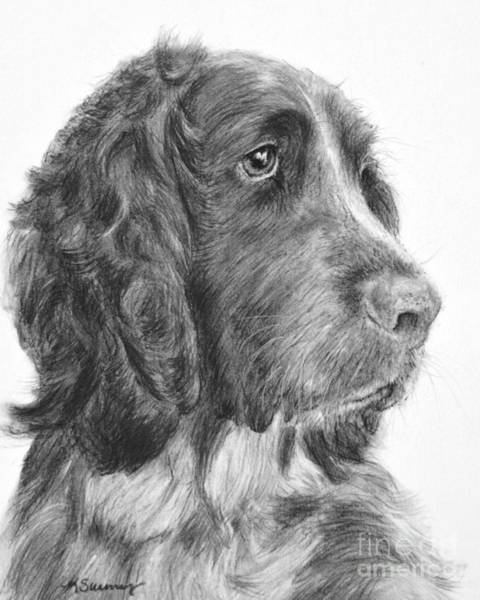 Drawing - Springer Spaniel Profile by Kate Sumners