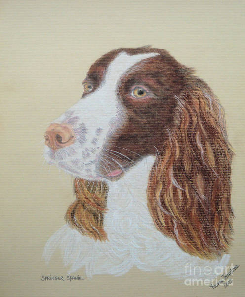 Field Spaniel Painting - Springer Spaniel by Yvonne Johnstone