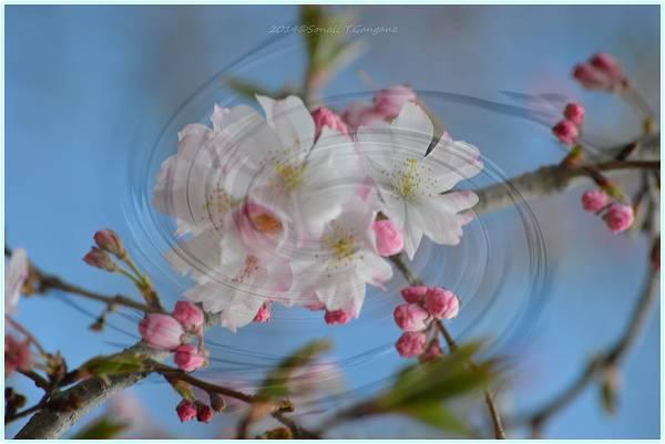 Greetingcards Photograph - Springing Blossoms by Sonali Gangane