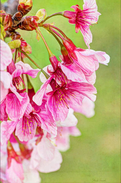 Wall Art - Photograph - Spring's Show by Heidi Smith
