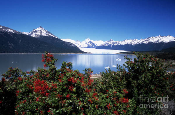 Photograph - Springtime At Perito Moreno by James Brunker