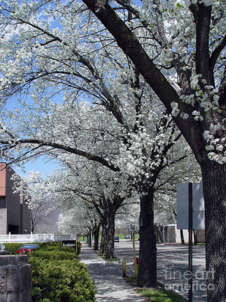 Photograph - Springtime Corning Ny 2 by Tom Doud