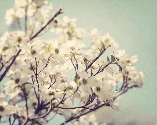Lisa Russo Wall Art - Photograph - Springtime Dogwood by Lisa Russo