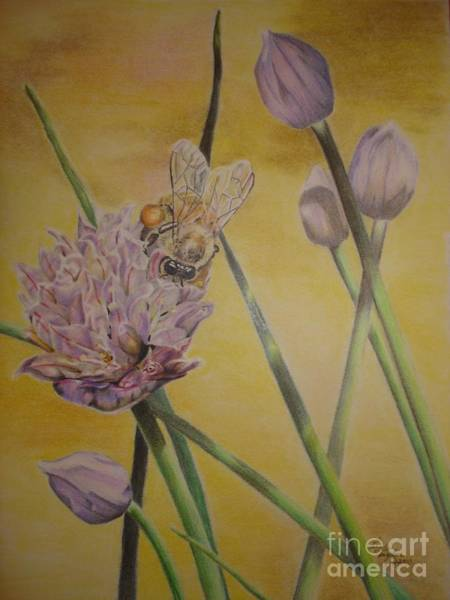 Chive Drawing - Springtime Glow by Laurianna Taylor