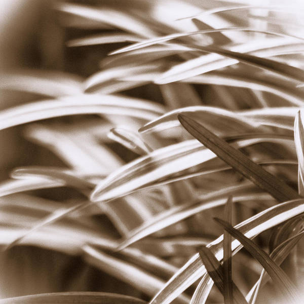 Photograph - Springtime Grasses by Carolyn Marshall