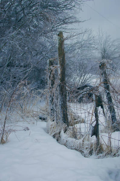 Icy Photograph - Springtime Icestorm by Susan Capuano