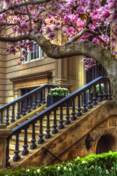 Photograph - Springtime In Boston by Joann Vitali