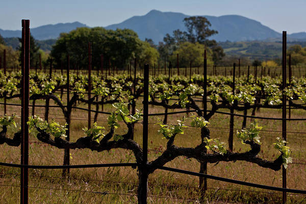 Photograph - Springtime In California Wine Country by George Rose
