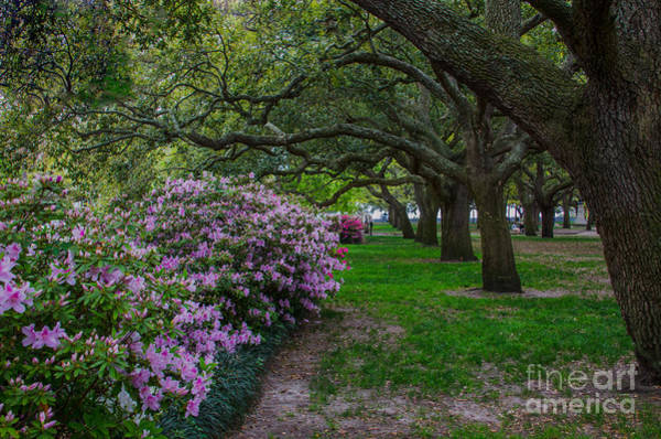 Photograph - Springtime In Charleston by Dale Powell