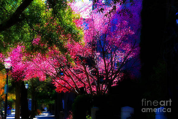 Wall Art - Photograph - Springtime In Charleston by Susanne Van Hulst