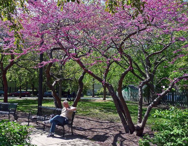 Photograph - Springtime In Chicago Park by Ginger Wakem